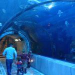 ケベックシティの観光名所「ケベック水族館(aquarium de Québec)」