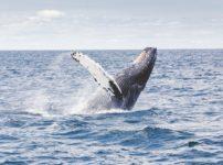 ケベックにクジラ出現!?2つのミステリー