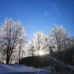 雪解け時期にしか見られない樹氷