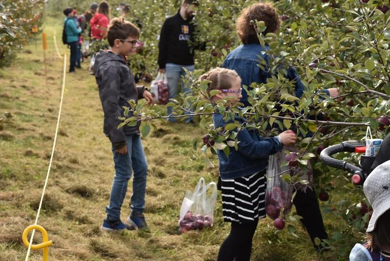 リンゴ狩りをする子ども