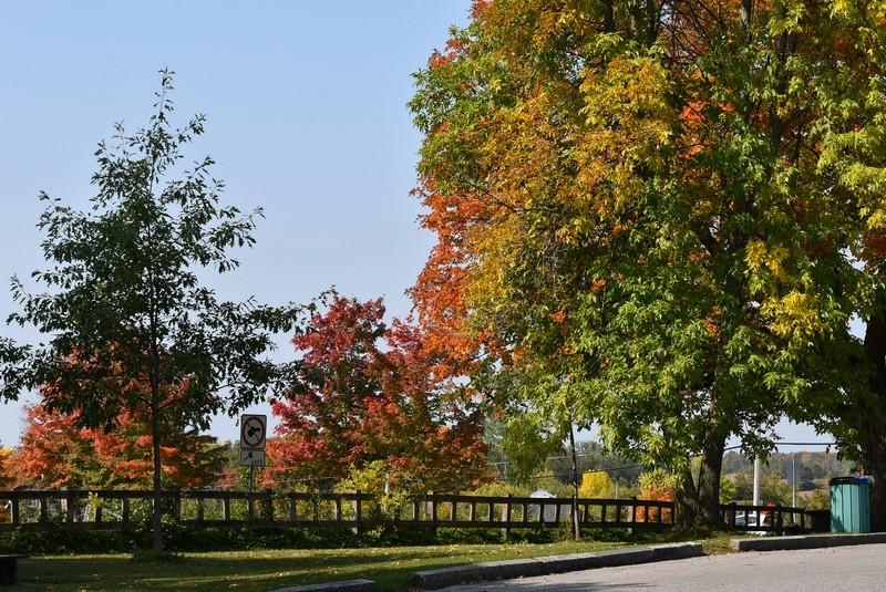 りんご園までの車窓からの紅葉