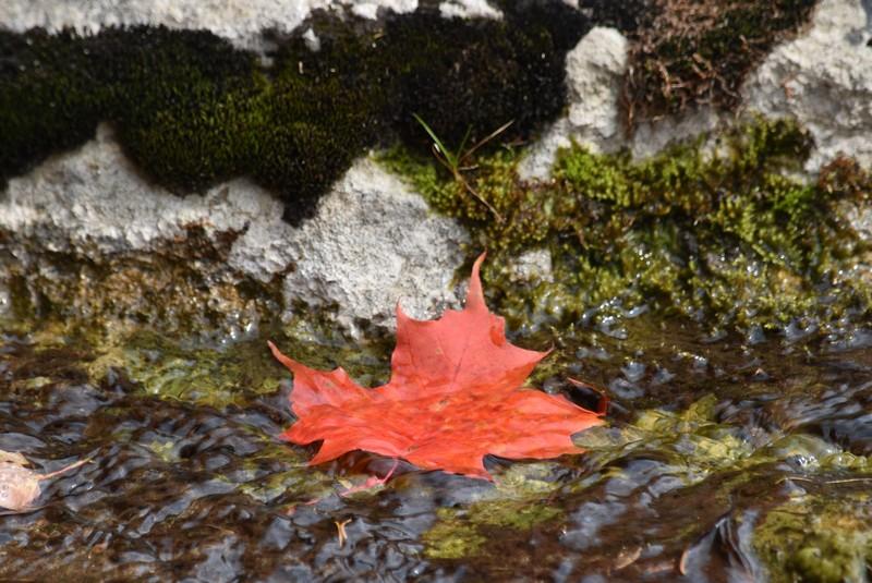 ケベックの紅葉